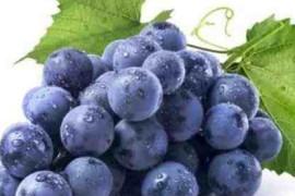 葡萄中含有的褪黑素可以缓解失眠
