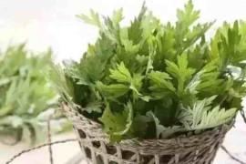 艾草可以把恶寒、癌症、湿气、病毒统统扫除