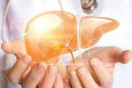 保养肝脏要注意些什么?